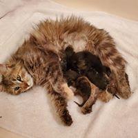 Desert Cat Rescue & Sanctuary of Arizona