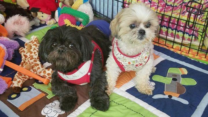 Teddy Bear & Loki Turner, rescues with #LAHPSTR