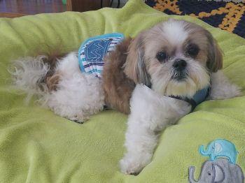 Loki Turner, a rescue dog with #LAHPSTR