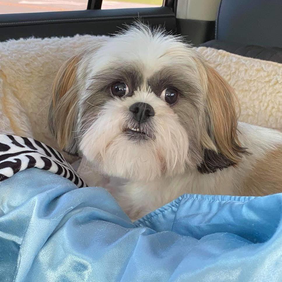 Paprika Edinburg, a rescue dog with #LAHPSTR