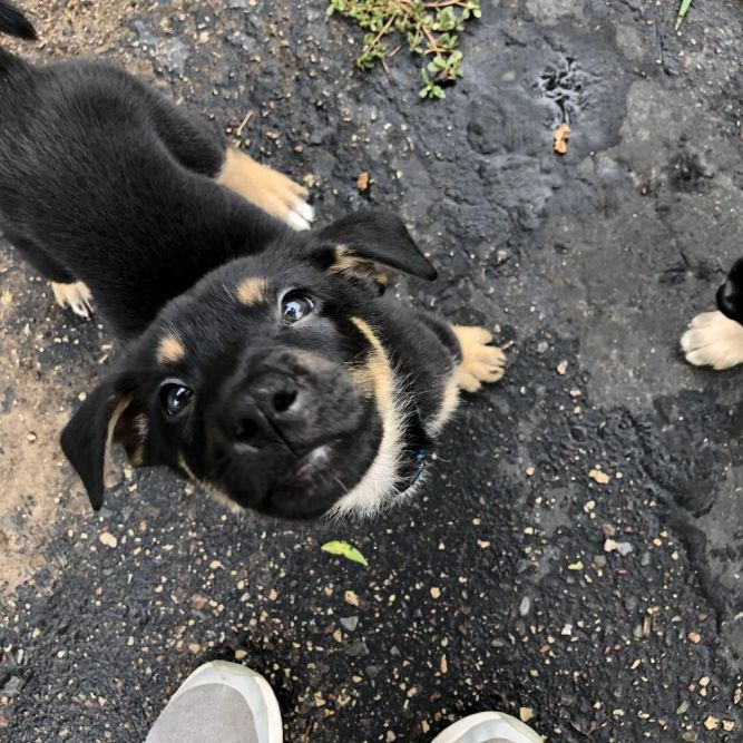 Veterinary Rescue League