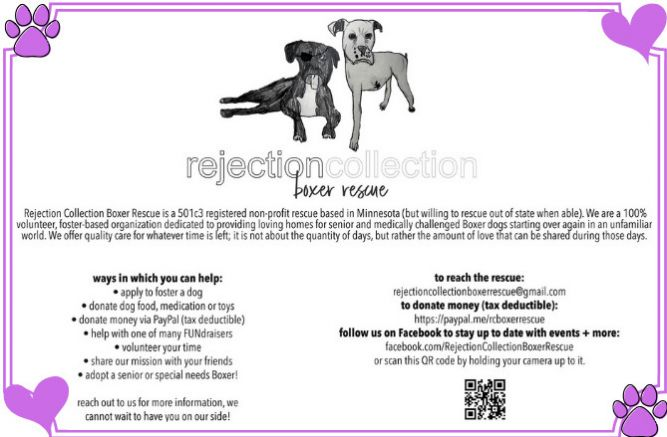 Rejection Collection Boxer Rescue