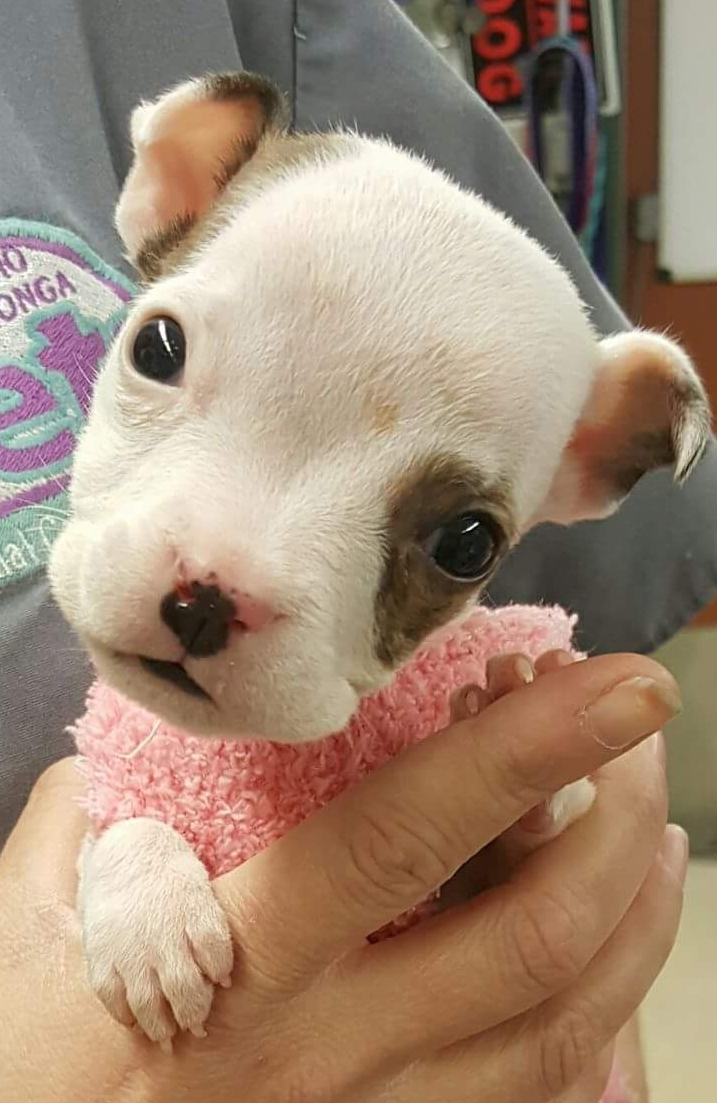 We take Hydrocephalus puppies in need