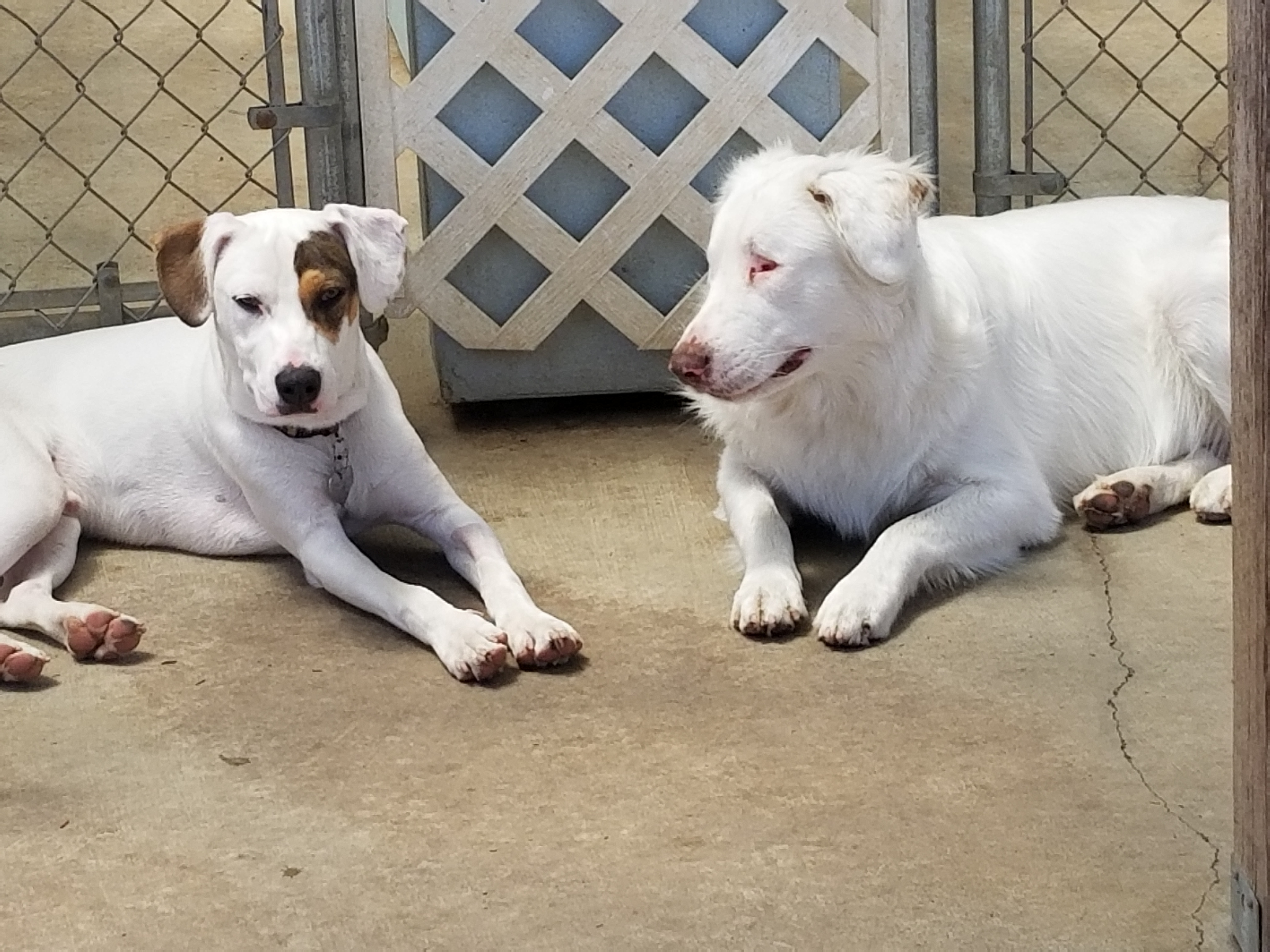 Our 2 spcial needs deaf dogs