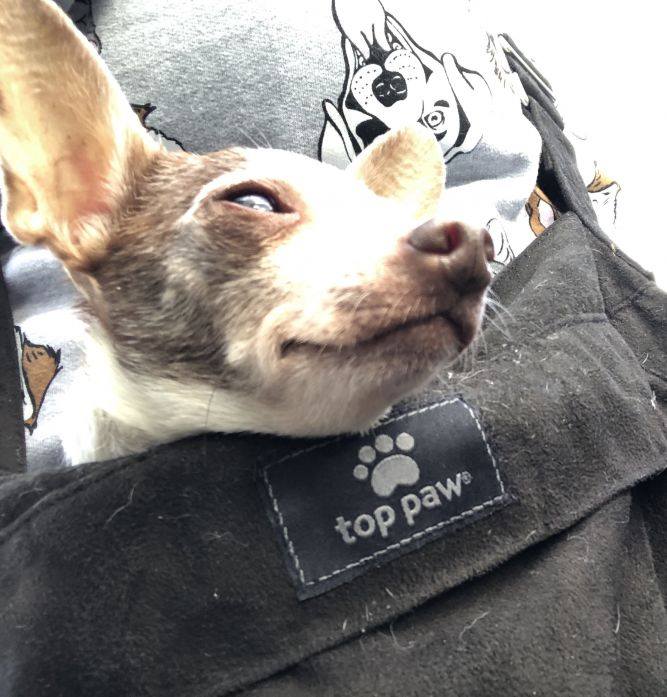 Tails Up Paws Down Rescue
