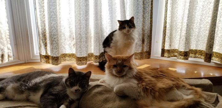Three of the boy's, Goodie, Mojito & Houdini.