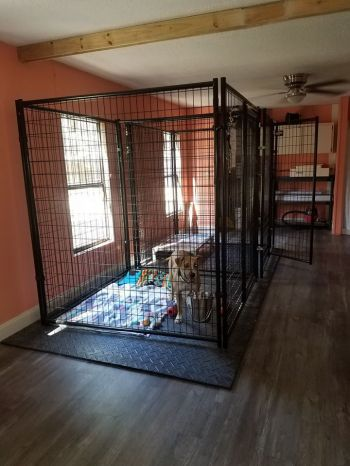 Bright and airy kennel room.