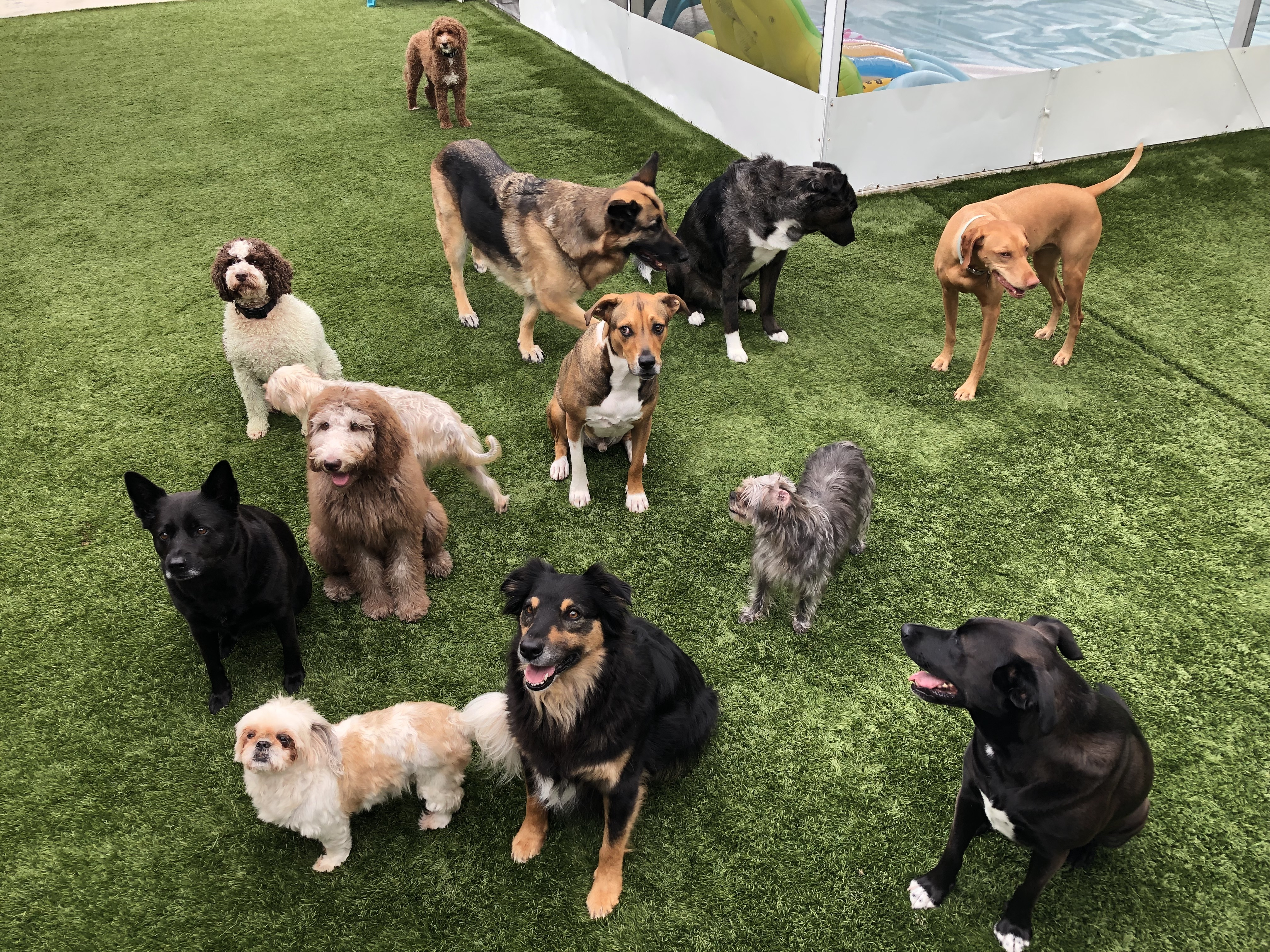 Group Shot of some of the dogs we had