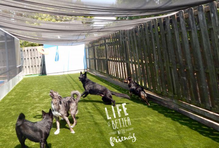 Play time in the yard  Fun! Fun ! Fun!