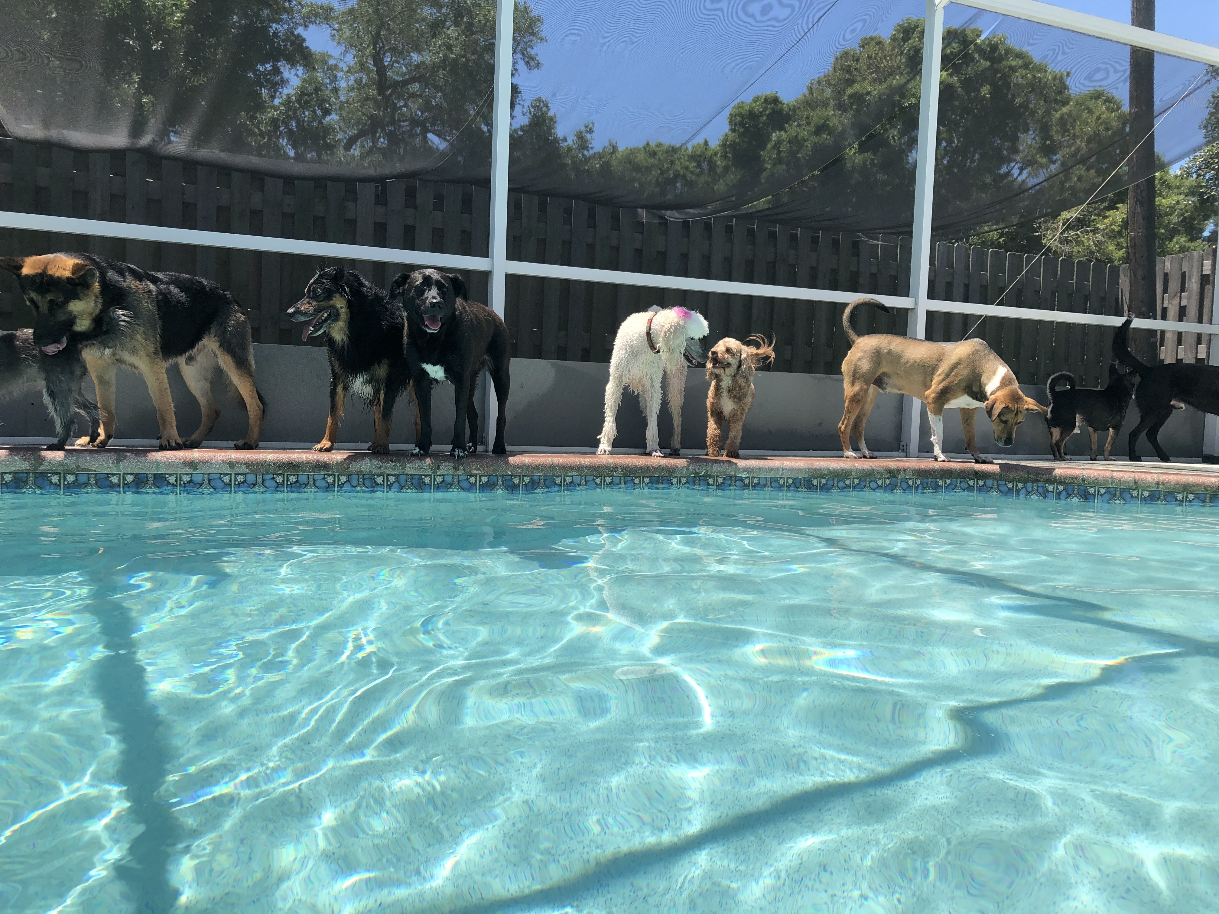 Pool Time while the pups are here