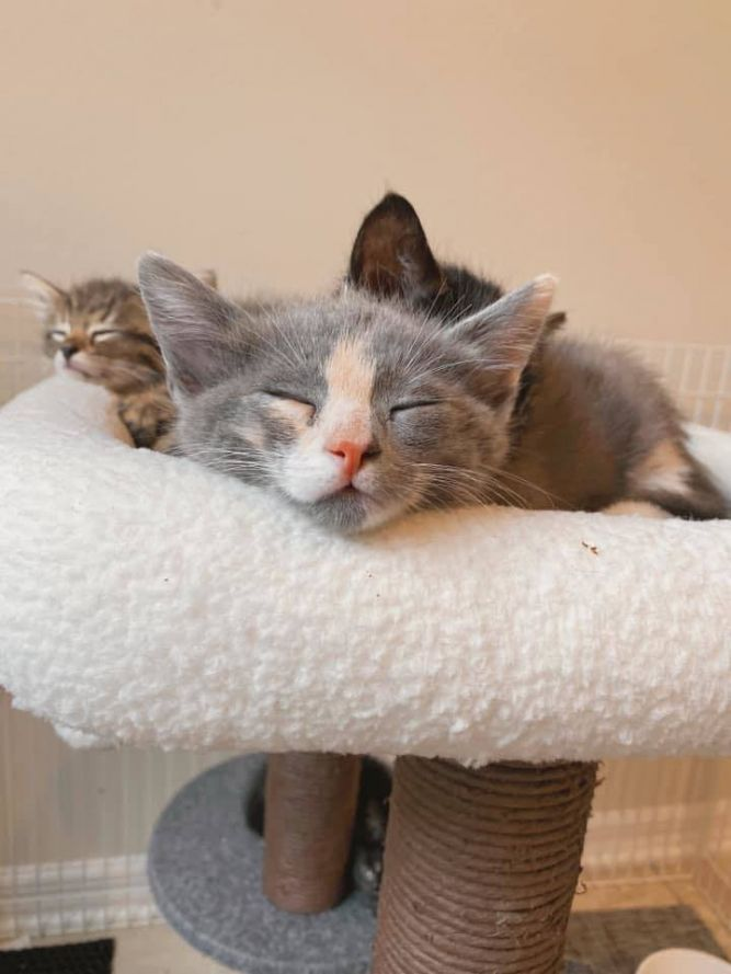 Kingdom Cat Rescue