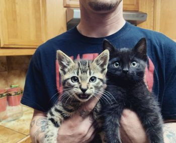 Jet and Joey, adopted June 2020