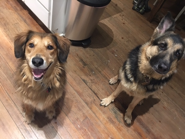 Barley, left, with his new sister.