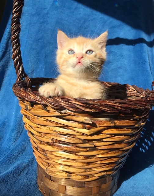 Cute kitten Chance