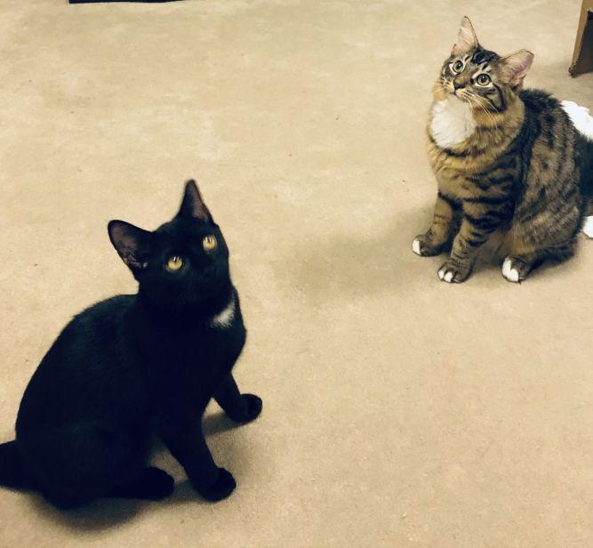 Love Four Paws Animal Rescue