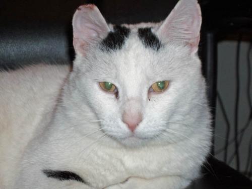 Simon - Adopted