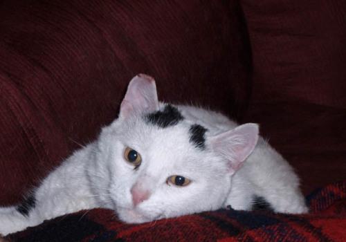 Simon - Adopted 2