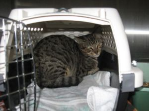Cats For Adoption Near White Rock Bc Petfinder