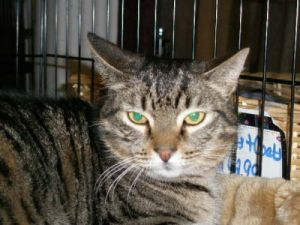 Cat for adoption - Barn_Cats, a Tabby Mix in Ocean City ...