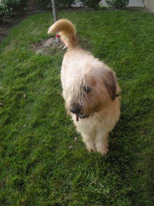 Petfinder Pet List