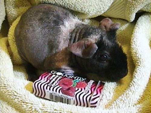 Fuzzy the Hairless 2