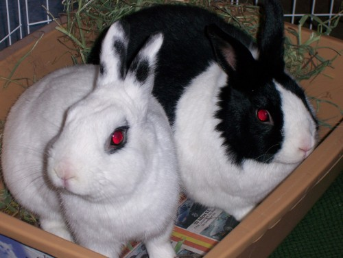 Smudge and Poppy