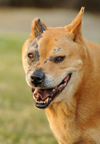 Hachi–ADOPTED! 1