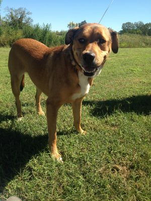 Brownie is about 6 years old and is spayed and all shots are current Gets along well with other ani