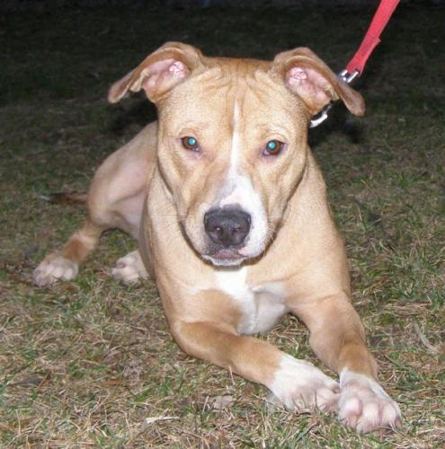Abby ADOPTED! 3