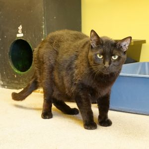 This black-furred boy came in off the street with Bert Bert was adopted some time ago and Peter was