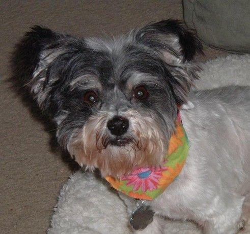 Lulu Adopted! 1