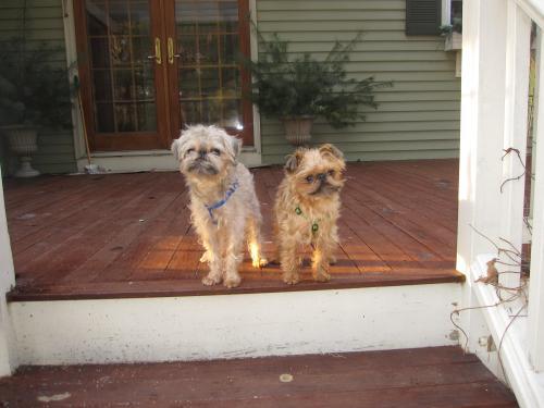 Dexter & Danny 1