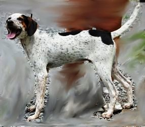 Shane, an adopted Coonhound & Pointer Mix in Willingboro, NJ
