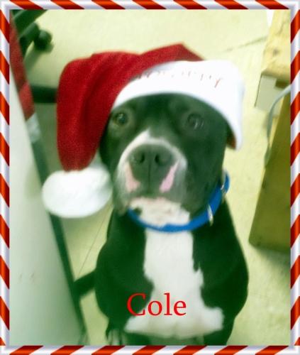 Cole 1