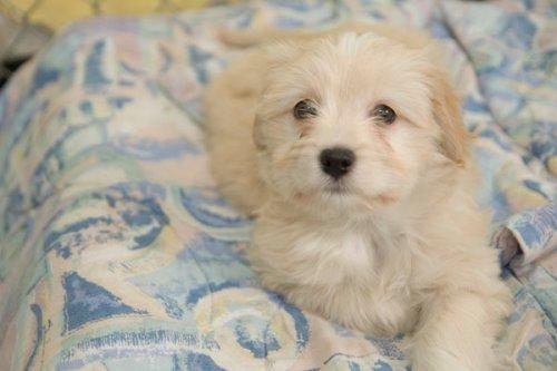 female puppy 2