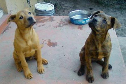 Puppies! 1