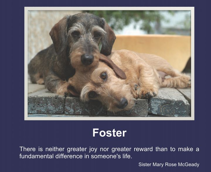 Foster Homes Needed! 1