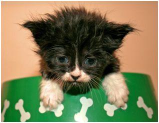 Foster A Kitten