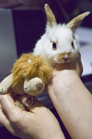 We are truly Lucky Bunnies We are looking for a loving forever home In return we will give you k