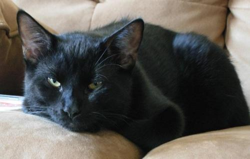 Gallegher  **ADOPTED** 2