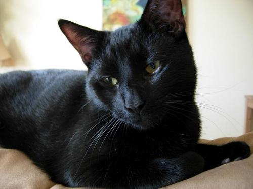 Gallegher  **ADOPTED**