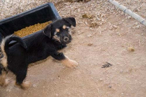 Jj, an adopted Terrier Mix in Fort Smith, NT