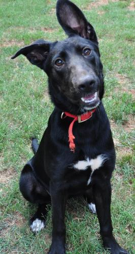 Dog For Adoption Raleigh Near Charlotte Nc Petfinder