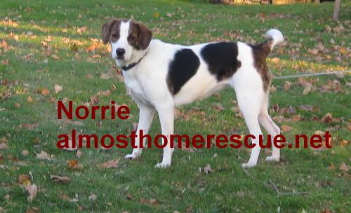 Norrie 3