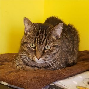 Mama previously known as Leona Helmsley is a brown tabby cat with pretty yellow-green eyes She wa