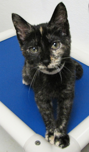 Ingrid-Adopted