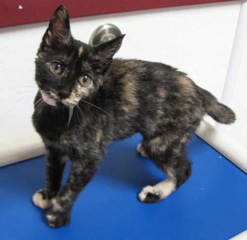 Ingrid-Adopted 2