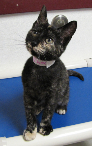 Ingrid-Adopted 3