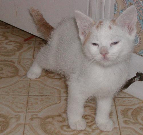 Morris-Adopted!
