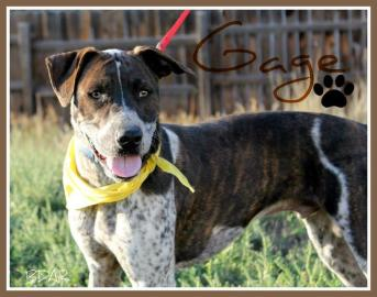 Gage-Sponsored!, an adopted German Shorthaired Pointer & Catahoula Leopard Dog Mix in Cheyenne, WY